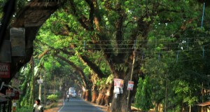 Jessore Road Save Trees